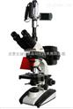 攝像落射熒光顯微鏡