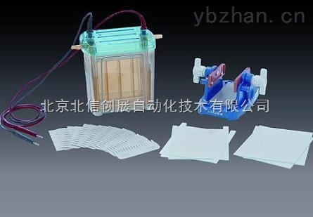 DL19- DYCZ-24EN-雙垂直電泳儀