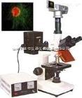 LDX-DFM-30D-正置熒光顯微鏡