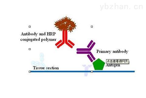 谷氧还蛋白/巯基转移酶抗原